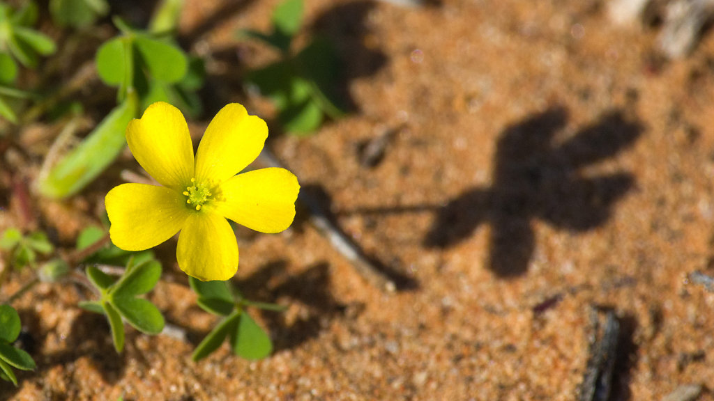 AM35391-Editcr1080-Wildflower.jpg