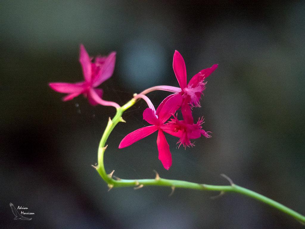 ASM0028-Editr1080-Orchid.jpg